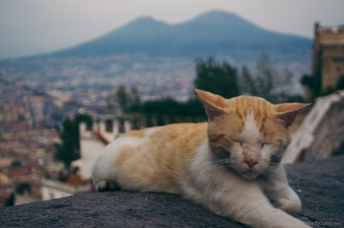 An abandoned cat is sleeping, the Vesuvio in the backgrood – Vomero, Italy