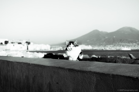 A cat is posing on in front of the Vesuvio in Naples (Italy)